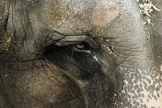 Elephant by Melissa Petrey