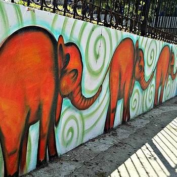 Elephant Mural by Kayla  Pearson