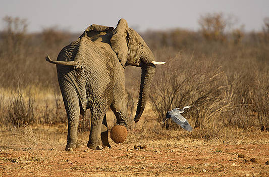 Paul W Sharpe Aka Wizard of Wonders - Elephant on the Run