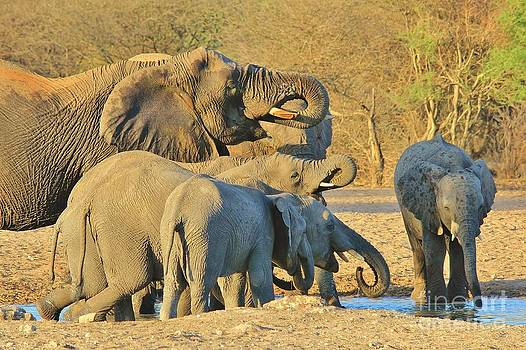 Hermanus A Alberts - Elephant Quench of Thirst