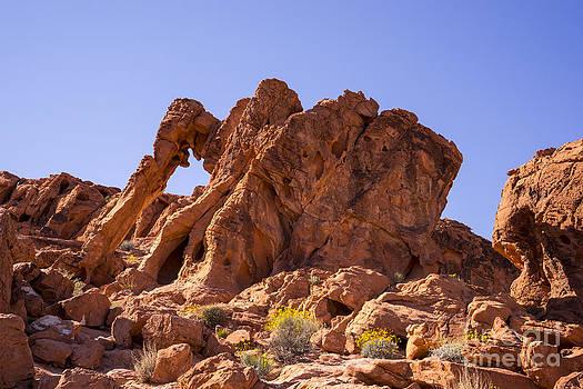 Elephant Rock by Nina Prommer