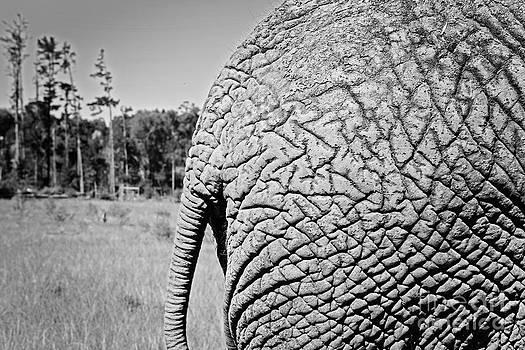 Elephant Rump by Gillian Vann