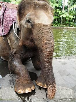 Elephant Safari by Crystal Beckmann
