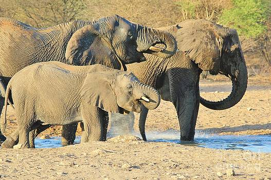 Hermanus A Alberts - Elephant Thirst Quench