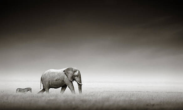Elephant with zebra by Johan Swanepoel