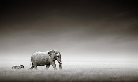 Elephant with zebra by Johan Swanepoel