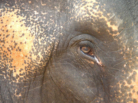 Elephant's Eye by Doveen Schecter