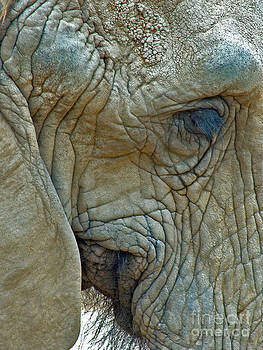Mae Wertz - Elephant