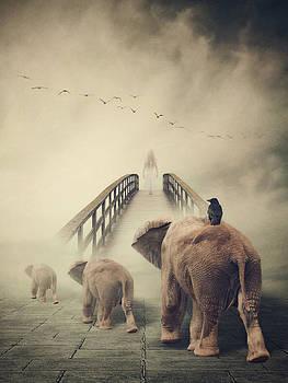 Elephants by Kim Zier