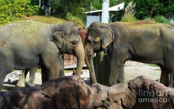 Elephants Snuggle by Jeanne Forsythe
