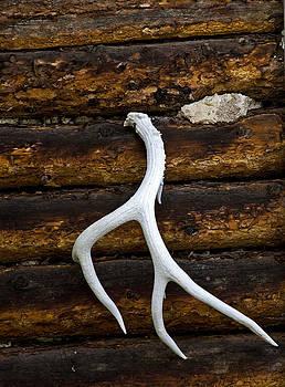 Elk Antler by Patrick Derickson