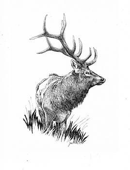 Elk by Barbara Lightner