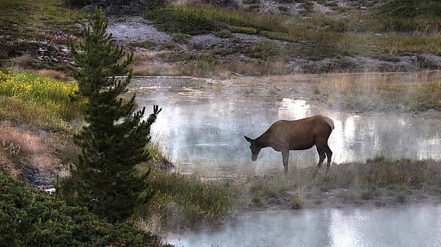 Elk Dreams by Cynthia Bruner