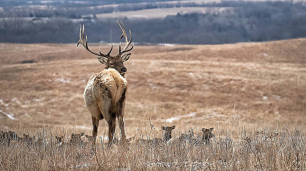 Elk by Garett Gabriel