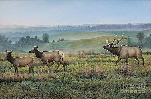 Elk in the Midwest by Phillip  Powell