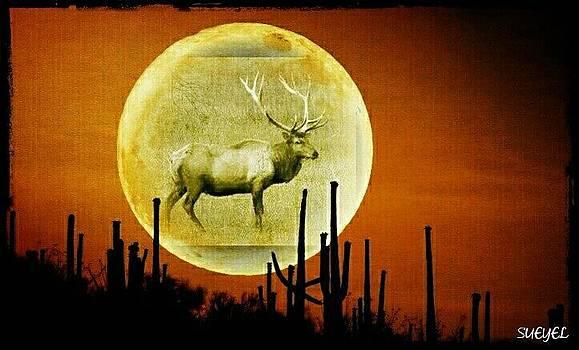Elk Moon by Sueyel Grace