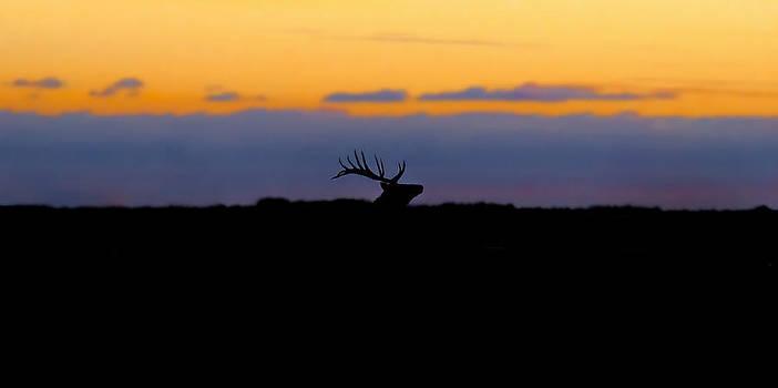 Elk Sunrise Silhouette  by Garett Gabriel