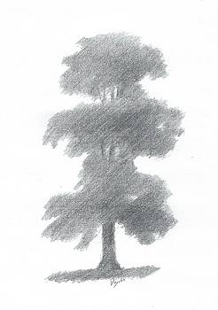 Elm Tree Drawing Number One by Alan Daysh