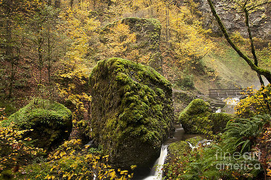 Vivian Christopher - Below Elowah Falls