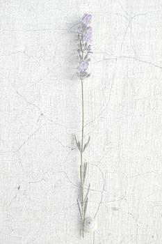 Elusive by Ioanna Papanikolaou