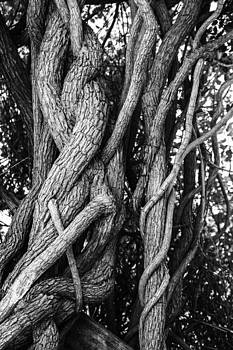 Embracing rooted love by Luna Curran