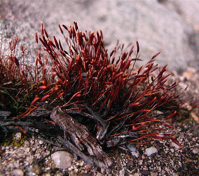 Sandy Tolman - Emerald and Fire Moss - 5539 - Campfire 2 - crp
