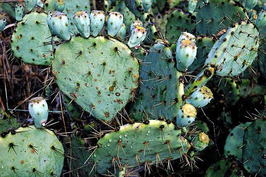 Robert Anschutz - Emerald Cacti
