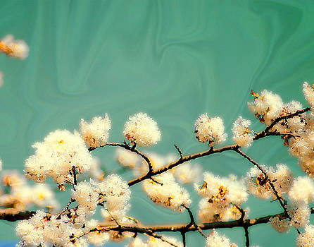 Emerald Cherry Blossom by Marcie  Adams