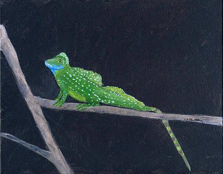 Emerald Lizard - Costa Rica by Linda Feinberg