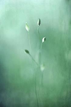 Emerge by Annie Snel