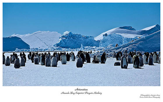 Emperor Penguin Rookery by David Barringhaus