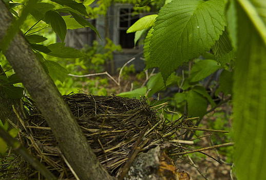 Empty Nests by Kim Kruger