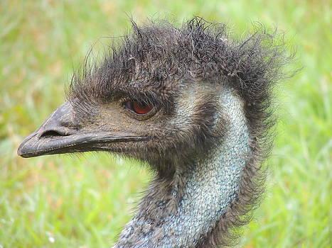 Anastasia Konn - Emu