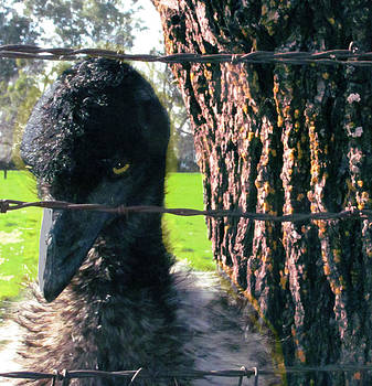 Emu next to tree by Marcia Cary
