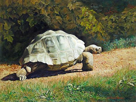Enchanted Turtle's Terrific Journey by Svitozar Nenyuk