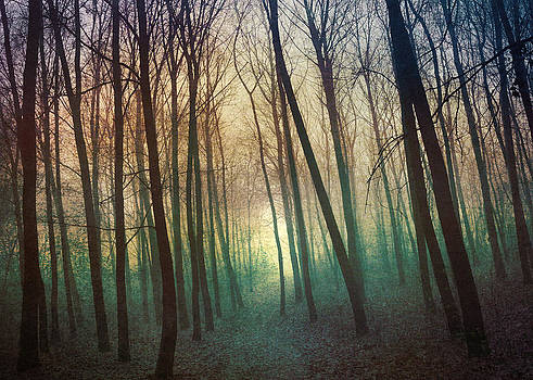 Enchanting Moody Forest by Denis Marsili