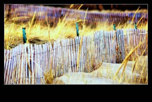 Rosemarie E Seppala - Enclosed Sand Dune