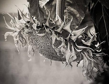 End of Season by Virginia Folkman