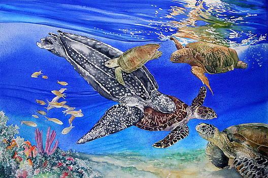 Endangered Ocean by Kitty Harvill