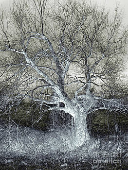Enigmatic Tree Of Light by Miss Dawn