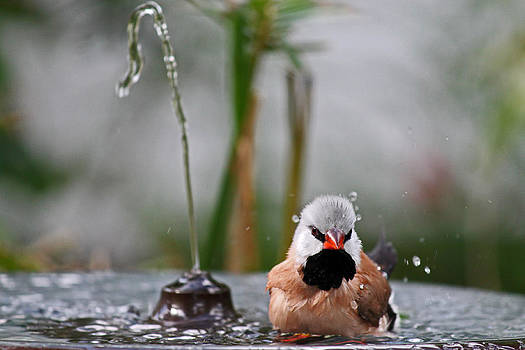 Enjoying my shower by Lily K
