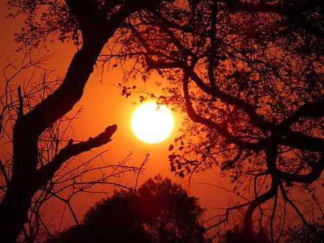 Enraptured Sun I by Yelnats TM