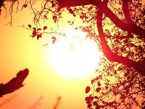 Enraptured Sun II by Yelnats TM
