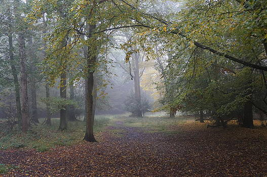Epping 3 by David  Hawkins