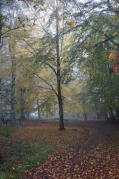 Epping 9 by David  Hawkins