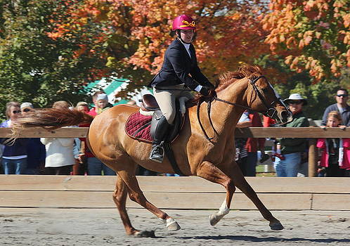 Rosanne Jordan - Equestrian Grace