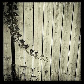 Escaping Vine by Deirdre Ryan