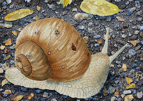 Escargot by Marisa Gabetta