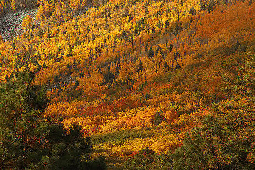 Susan Rovira - Escudilla Mountain Fall Splendor