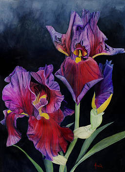 Estremamente Profondi Iris by Aaron Acker